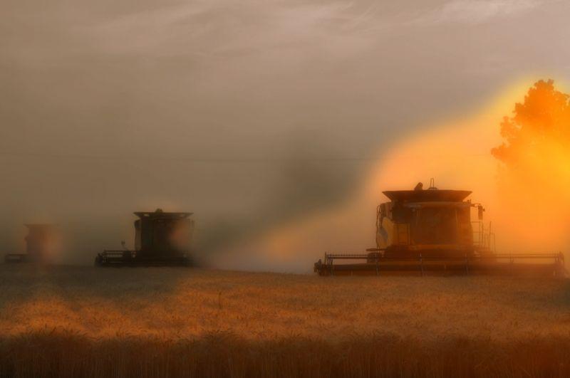 Heaven of Harvests