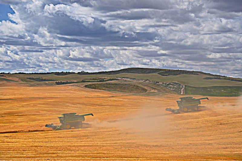Teton Grain Harvest